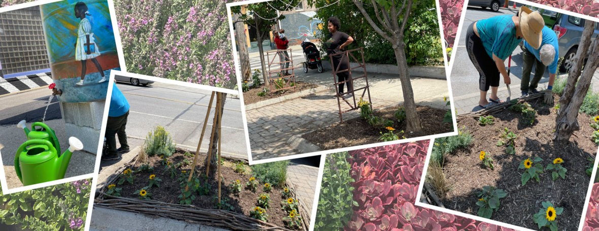 Various snapshots of gardeners and gardens from The Green palette project